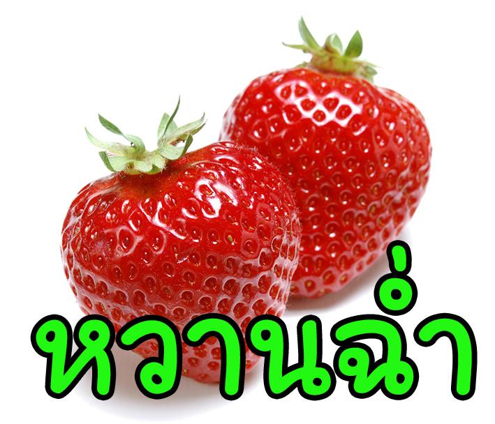 SS กลิ่นสตรอว์เบอร์รี่หวานฉ่ำ Sweet Strawberry Flavor