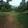 สวนลำไย 9 ไร่ เชียงใหม่ &#x2605 orchard 9 rai Chiang mai &#x2605
