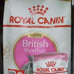 royal canin british shorthair kitten 2kg 700รวมส่ง