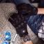 ถุงมือ i-con Pursuit Glove stealth thumbnail 2