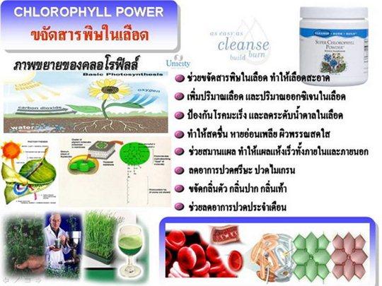 สรรพคุณของ Chlorophyll unicity