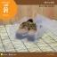 SB-01-002 : กล่องรองเท้า ขนาด 23.0 x 31.0 x 10.0 ซม. thumbnail 2